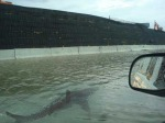 A shark by the levee?